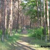 Kaszewiec. Cmentarz wojenny z 1915 r.