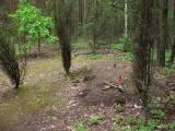 3625_komorowo_20080522.jpg