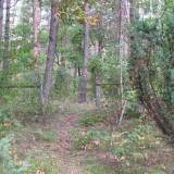Maciejowice - cmentarz w lesie.