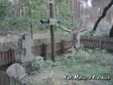 Mogiły poległych artylerzystów niemieckich.