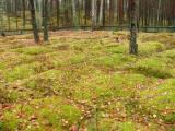 171_niksowizna_20051112.jpg