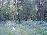 2005-09-08_sierzputy_mlode_001.jpg