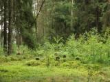 069_gralewo-plosnica_ww1.jpg