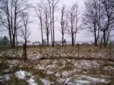 jeziorowskie01.jpg