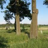 Cmentarz IWŚ w Mielnie (oficerski)